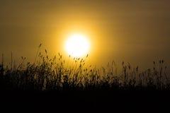 Трава в туманном рассвете Стоковые Фотографии RF
