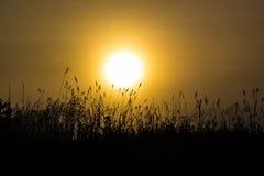 Трава в туманном рассвете Стоковое фото RF