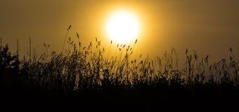 Трава в туманном рассвете Стоковые Изображения