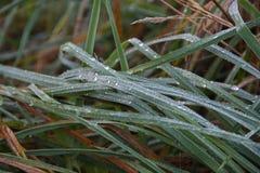 Трава в утре Стоковые Фото