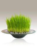 Трава в шаре иллюстрация штока