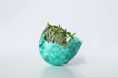 Трава в яичке Стоковые Фотографии RF