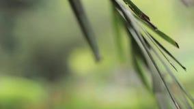 Трава в outdoors 1920x1080 Hd леса акции видеоматериалы