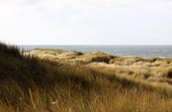трава голландеца дюн Стоковая Фотография