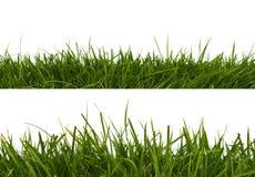трава горизонтальная стоковая фотография
