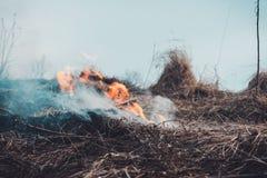 Трава горит, огонь чего разрушает все на своем пути стоковые фотографии rf