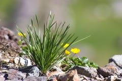 Трава горы Стоковая Фотография