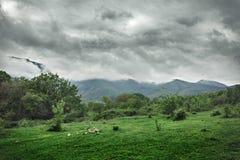 Трава гор лета зеленая и драматическое небо Стоковые Фото