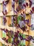 Трава гольца Стоковая Фотография RF