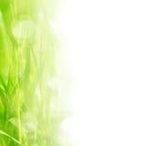 трава граници Стоковое Изображение RF