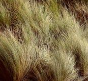 трава длиной Стоковые Фотографии RF