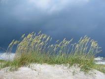 трава дюны Стоковое Изображение