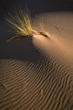 трава дюны стоковая фотография