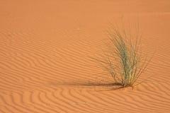 трава дюны Стоковые Фотографии RF