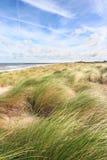 трава дюны Стоковая Фотография RF