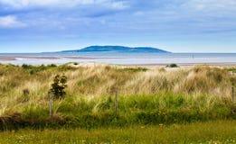 трава дюн Стоковое Изображение