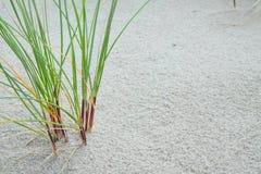 трава дюн Стоковые Фото