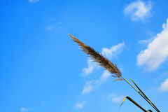 Трава леммы та свет солнца Стоковые Фото