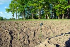 Трава леса Стоковое фото RF