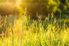 Трава лета природного источника природы зеленая в Bokeh, Boke с Солнцем Стоковое Фото