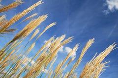 Трава лета Стоковое Изображение