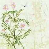 Трава лета wirh карточки Стоковое Изображение RF