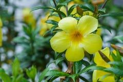 Трава желтой природы цветка зеленая Стоковое Фото