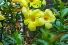 Трава желтой природы цветка зеленая Стоковые Фотографии RF