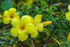 Трава желтой природы цветка зеленая Стоковое Изображение