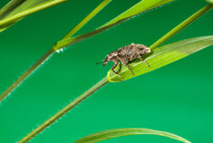 трава жука Стоковое Изображение RF