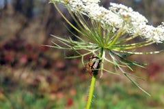 трава жука Стоковые Фотографии RF