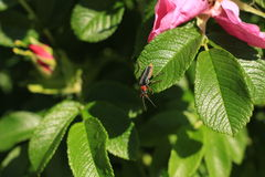 трава жука Стоковые Изображения RF