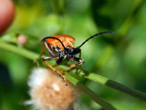 трава жука Стоковое Изображение