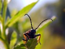 трава жука Стоковое фото RF