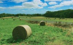 Трава завальцовки Стоковое Фото