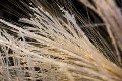 Трава замораживания Стоковое фото RF