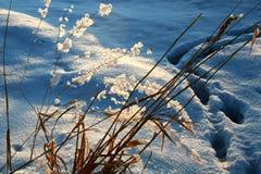 трава заморозка после полудня поздно Стоковые Фотографии RF