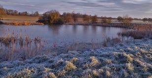 Трава заморозка пруда Belmont замерли зимним временем, который Стоковое Фото