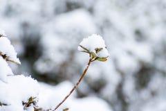 Трава заполнила с снегом во время сильного снегопада стоковые изображения rf