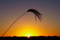 Трава 7 захода солнца Стоковая Фотография
