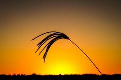 Трава 9 захода солнца Стоковое Фото