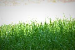 Трава за светом Стоковое Фото