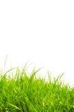 трава здоровая Стоковое Изображение RF