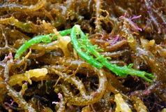 Трава зеленого моря Стоковые Фото