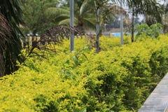 Трава зеленого цветка похожая в парке Стоковое Изображение RF