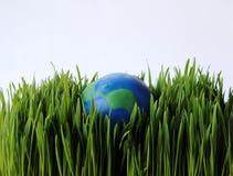 трава земли Стоковое фото RF
