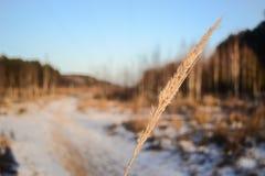 Трава зимы в покрытом снег лесе Стоковые Изображения RF