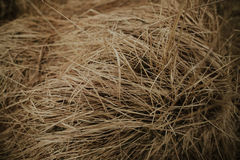 трава длиной Стоковые Изображения RF