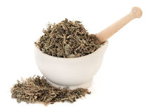 Трава лист горечавки Стоковое Фото