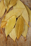 Трава лист залива Стоковое Изображение RF